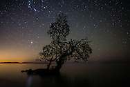 """I call this image """"Orion's Mangrove"""" as you can see Orion above an isolated mangrove along the shore of Lulu Key in the Ten Thousand Islands, Everglades."""