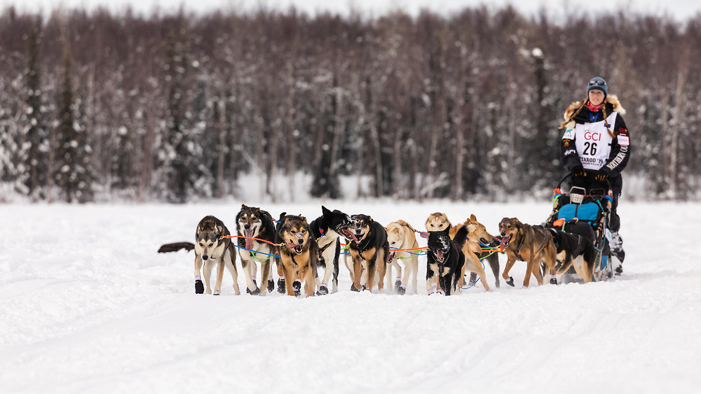 Musher Kristy Berington after the restart in Willow of the 47th Iditarod Trail Sled Dog Race in Southcentral Alaska.  Afternoon. Winter.
