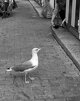 Gull and Photographer. Street Photography in Cascias. Image taken with a Fuji X-T3 camera and 35 mm f/1.4 lens.