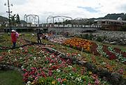 Feria de Las Flores, Chiriqui. ©Victoria Murillo/istmophoto.com