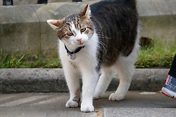 © Licensed to London News Pictures. 19/04/2017. London, UK. Downing Street cat Larry is seen in Downing Street in London on 14 April 2017, the morning after Prime Minister THERESA MAY announced plans for a snap general election. Photo credit: Tolga Akmen/LNP