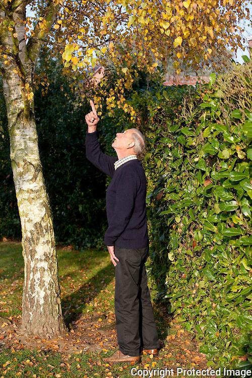 369856-Zeven Kerkuilen houden zich schuil in de boom van Marcel uit Gestel