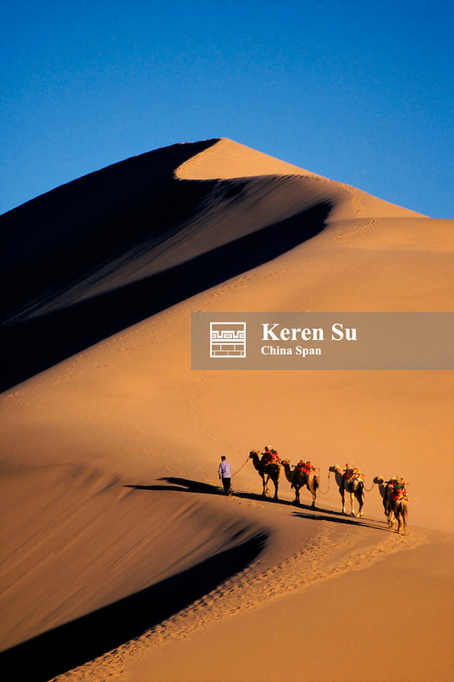 Camel caravan with sand dune at sunset, Taklimakan Desert, Dunhuang, Gansu Province, Silk Road, China