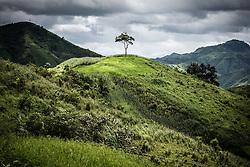 Lone tree grows on top of a hill in Phi Nhu Commune, Dien Bien Province, Vietnam, Southeast Asia