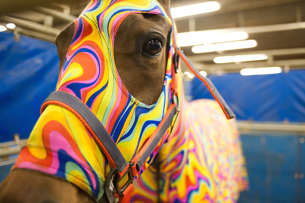 A colorful horse dressed to keep warm.