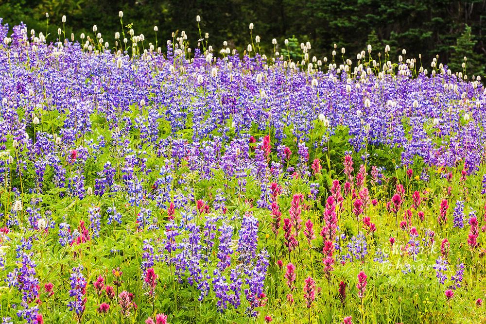 Wildflowers, Paradise, Mt. Rainier National Park, Washington, USA