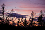Idaho, Coeur d'Alene National Forest, Fernan Hill. A mountain top view of Trees in silhouette against a vibrant sunset  from Fernan Saddle east of Coeur d' Alene. . PLEASE CONTACT US FOR DIGITAL DOWNLOAD AND PRICING.