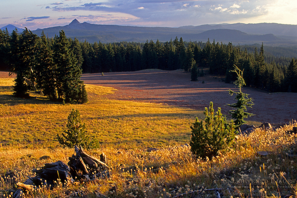 Forest and meadw at sunset, Crater Lake National Park, Oregon