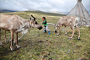 Stunning images reindeer herders of Mongolia<br /> <br /> Tsaatan people are reindeer herders and live in northern Kh&ouml;vsg&ouml;l Aimag of Mongolia. Originally from across the border in what is now Tuva Republic of Russia,the Tsaatan are one of the last groups of nomadic reindeer herders in the world. They survived for thousands of years inhabiting the remotest Ulaan ta&iuml;ga, moving between 5 and 10 times a year. <br /> The reindeer and the Tsaatan people are dependent on one another. Some Tsaatan say that if the reindeer disappear, so too will their culture. The Tsaatan depend on the reindeer for almost, if not all, of their basic needs:  their reindeers provide them with milk, cheese, meat, and transportation. They sew their clothes with reindeer hair, reindeer dung fuels their stoves and antlers are used to make tools. They do not use their animals for meat. This makes their group unique among reindeer-herding communities. As the reindeer populations shrink, only about 40 families continue the tradition today. Their existence is threatened by the dwindling number of their domesticated reindeer. Many have swapped their nomadic life for urban areas. <br /> <br /> Unique among reindeer-herding communities, the Tsaatan raise their animals almost exclusively for milk, with reindeer milk, yoghurt and cheese being the staples of their diet. Only a few reindeer are slaughtered during the year for supplementary meat, and also for the pelts they use to make thick winter coats. Almost all parts of the reindeer are utilised, and along with their wide deels (traditional Mongolian overcoats), the Tsaatan wear strong, warm boots fashioned from the hides and sinew of their reindeer. During the summer months, the reindeer&rsquo;s antlers are cut off, and since 1975, the Tsaatan have supplied some of these to China, where they are a desirable ingredient for traditional Chinese medicine. Tsaatan&rsquo;s reindeer lie at the heart of their sense of community. The reindeer are domesticated, and in many ways, they are treated l