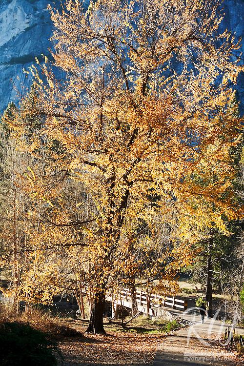 Tourist Walking Toward Yosemite Valley's Swinging Bridge During Fall Season, Yosemite National Park, California