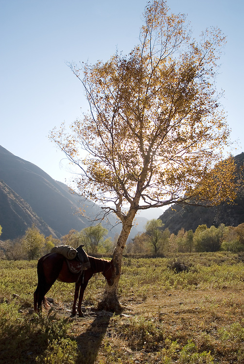 Images from the wild walnut forests of Kyrgyzstan, part of a conservation project with Fauna&Flora International and the Christensen Fund.