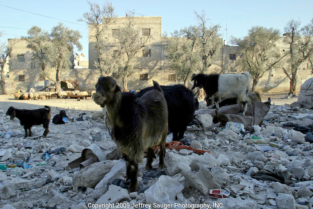 Lambs and goats graze in the garbage in the Iraqi area near the Shrine of Sayidda Zeinab in Damascus, Syria, Saturday, July 19, 2003. This pile of garbage outside the Al-kasid apartment hasn't been touched in more than six months. Since the war to topple Saddam Hussein began, commerce for the hundreds of thousands of Shiite Iraqi has slowed to a standstill.