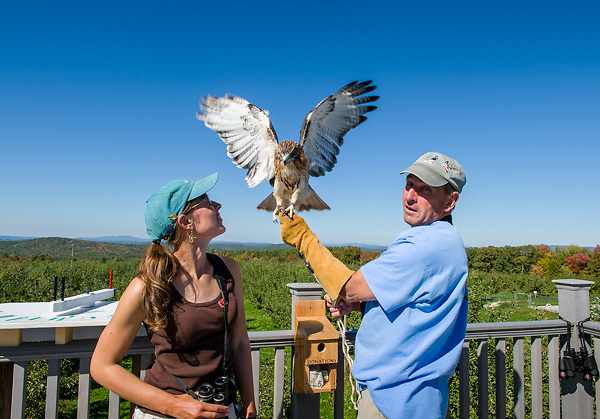 Hawk Watch at Carter Hill Orchard, Concord