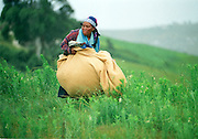 A panicked woman holds her belongings in a rolled up blanket as she flees the hamlet of Shoboshobane, on the KwaZulu/Natal South Coast.  On Christmas Day, the ANC village was attacked by Inkatha neighbours killing more than 20 residents, and driving the rest into refugee camps.  December 26th, 1995.