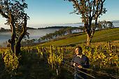 Maysara Winery image library example