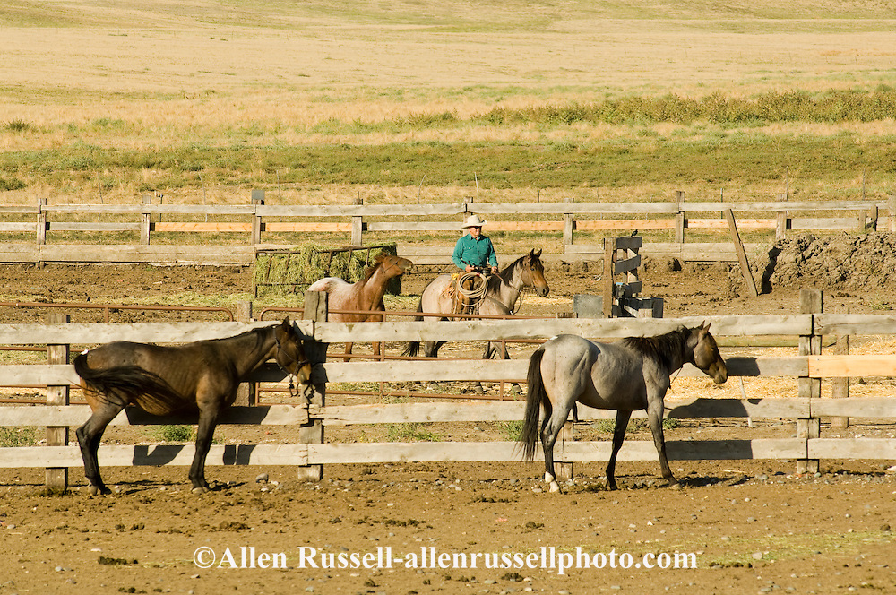 Cowboy, C.T. Ripley, training, quarter horse colt to lead, Montana, ranch, <br />