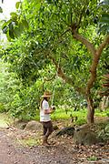 Daniel Carroll of Hua Orchards