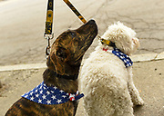 dog costume photograph