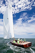 Race Horse sailing in the Opera House Cup Regatta.