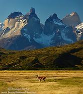 Untamed Patagonia!