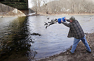 Frank Schreibeis of Florida releases trout into the Neversink River in Cuddebackville on Wednesday, March 30, 2011. Schreibeis and other members of the Orarnge County Federation of Sportsmen helped release trout from the Department of Environmental Conservation's Catskill Hatchery in Livingston Manor at different locations on the river. Trout season in New York opens on Friday, April 1.
