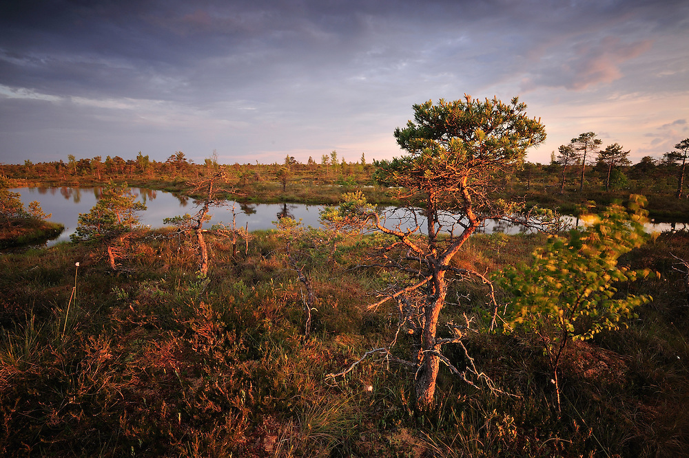 Bog forest, Kemeri National Park, Latvia