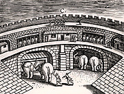 Roman army stables with elephants at ground level, with horses on the upper level.   From 'Poliorceticon' by Justus Lipsius (Antwerp, 1605). Copperplate engraving.