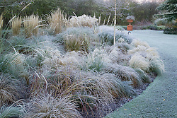 The grasses bed in frost. Grasses include Stipa tenuissima, Stipa arundinacea, Carex testacea, Calamagrostis x acutiflora 'Karl Foerster' and Pennisetum alopecuroides 'Hameln'. Design: John Massey, Ashwood Nurseries