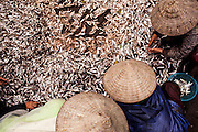 Women sort out their daily fish catch, Nam Dinh Province, Vietnam, Southeast Asia