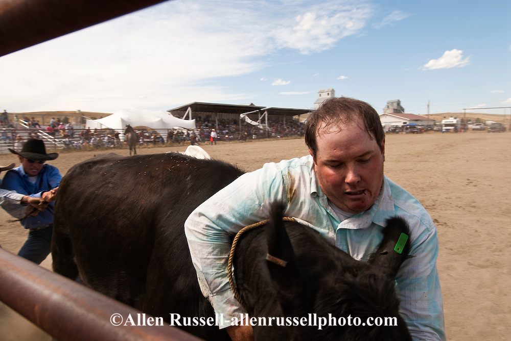 Wilsall Ranch Rodeo, Montana, Wild Cow Milking, Cleve Swandal, Kurt Mraz, Lazy SR Ranch Team, MODEL RELEASED