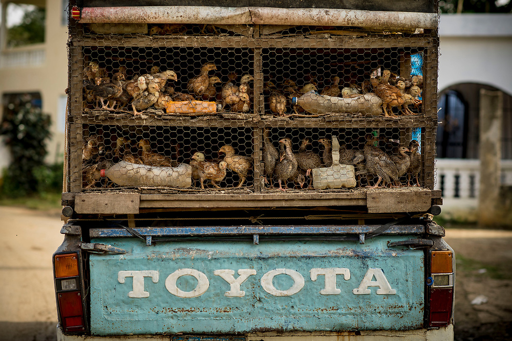 July 23, 2017, El Mamon, Dominican Republic:<br /> A truck carrying chickens is shown in El Mam&oacute;n during the 2017 Lindos Sue&ntilde;os trip in the Dominican Republic Sunday, July 23, 2017. <br /> (Photo by Billie Weiss/Boston Red Sox)