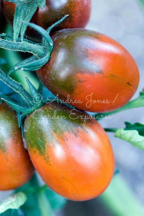 Tomato 'Black Plum' (mini-plum heirloom)