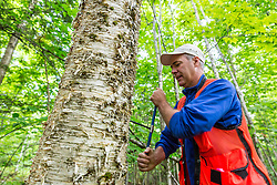 Brian Dangler of The Conservation Fund takes a core sample from a tree in the East Grand Lake forest in Weston, Maine.