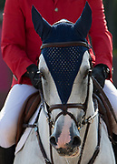 Suspens Floreval ridden by Vladimir Tuganov (RUS) before the start of the AKITA Drilling Cup - 1.60m during Spruce Meadows Masters, September 6, 2017 in Calgary, Alberta Canada. Rebecca Berry Photography
