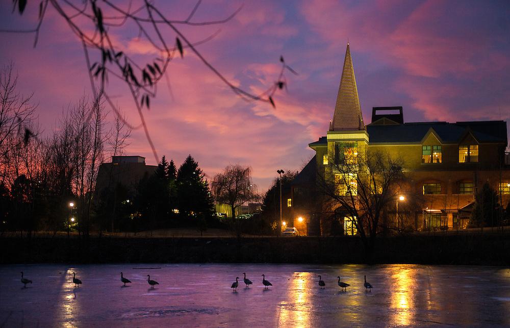 Geese walk across Lake Arthur at Sunset.