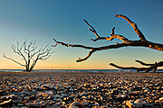 Driftwood trees against the sunrise on Boneyard Beach at Botany Bay Plantation October 16, 2014 in Edisto Island, South Carolina. Each year 144,000 cubic yards of sand is washed away with the waves at the beach and nearshore eroding the coastal forest along the beachfront.