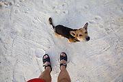 Beach dog on Pattaya beach.