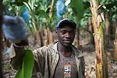 ASOARAC, Fairtrade Bananas, Dominican Republic