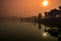 Foggy Florida Lake Morning