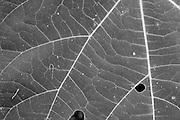 Tree leaf art<br /> -Savannah, GA U.S.A