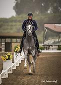 Horse No 41
