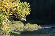 Salmon River, River, Fall, Fall Colors, Autumn, Salmon, Idaho