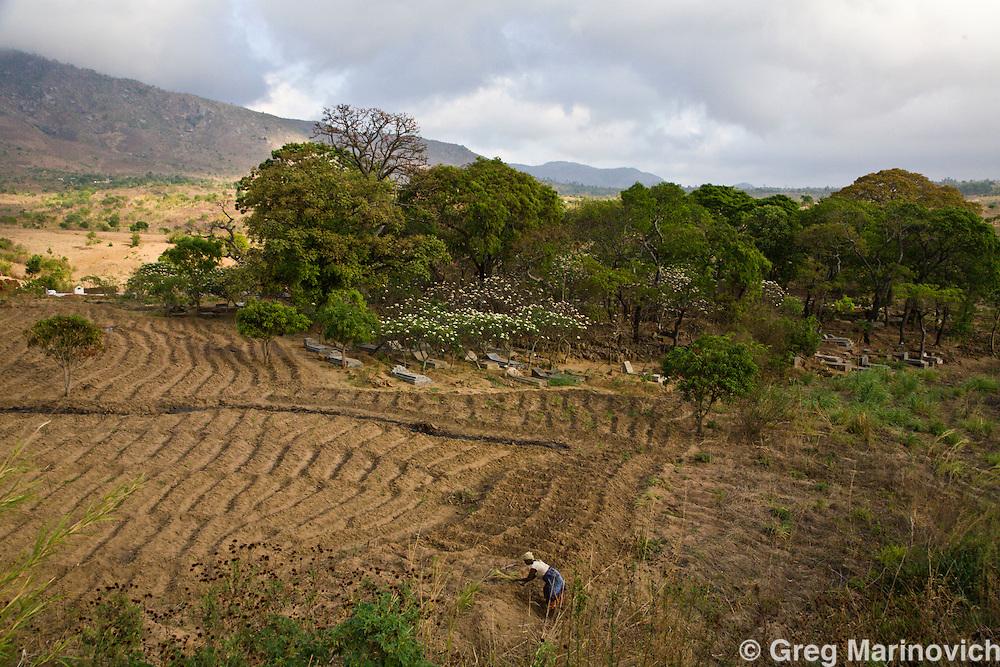 A woman prepares a field for planting, next to a graveyard, outside Limbe, Malawai. Oct 2008. Photo Greg Marinovich