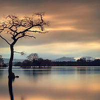 A scottish landscape photographers journey would not be complete without a pilgrimage to this spot by the bonnie banks of Loch Lomond. The lone tree that sits a couple of yards into the water from the shore of Milarrochy bay has been photographed countless times, and for good reason. Visitors to this lovely vantage point are afforded iconic views across the water west, past Inchlonig toward Luss with the peaks of Beinn Chaorach and ben Eich behind.This was my first visit to the location and I was keen to get something Different from the usual take on this view so I opted to go for a side profile looking southwest. I set the camera for a long exposure to enhance the sense of stillness and calm, which worked well with the warm tones of the afternoon sun and the cool mists rolling over the hills. A perfect backdrop for a silhouette of this amazing wee bonsai-esque tree.