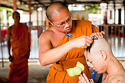 28 JUNE 2011 - CHIANG MAI, THAILAND:  A senior monk shaves the head of a man being ordained as a Buddhist monk at Wat Phrathat Doi Saket a large temple complex in Chiang Mai, Thailand. The temple at Doi Saket is said to have been built in the year 1112, but it has been renovated several times since then. Most Thai males enter the Buddhist clergy, called the Sangha, at least once in their lives. Their stay in the monastery can be as short as one week or a lifetime committment, depending on the man.    PHOTO BY JACK KURTZ