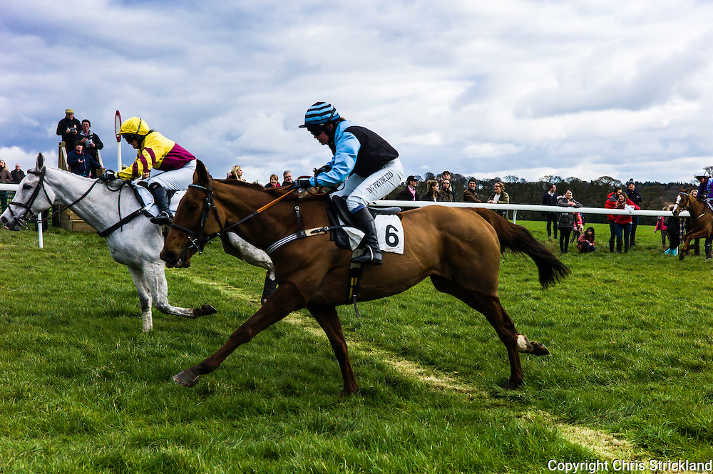Corbridge, Northumberland, England, UK. 28th February 2016.  Jockey Joanna Walton (near) brings Durban Gold home at the Tynedale Hunt annual Point to Point horse racing fixture.