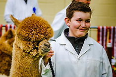 Scottish Alpaca Championship | Lanark | 15 April 2017