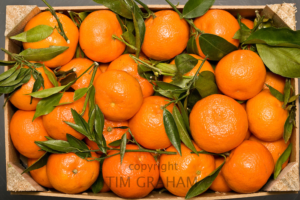Box of clementines, London, England, United Kingdom