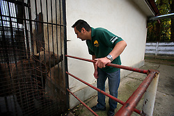 ROMANIA ONESTI 28OCT12 - Veterinary doctor Ciprian Cocianu takes a look at a captive Eurasian brown bear at the Onesti zoo. The zoo has been shut down due to non-adherence with EU regulations on the welfare of animals....jre/Photo by Jiri Rezac / WSPA....© Jiri Rezac 2012