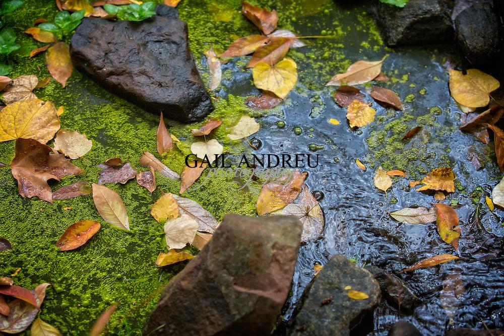 Fall (Autumn) Photography
